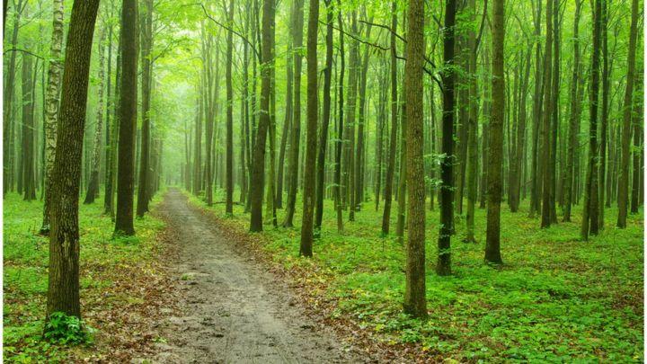 Doğal Kaynakların Kullanımında Çevre Duyarlılığı