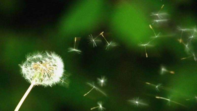 Alerjisi olanlar dikkat: Polenler Covid-19 riskini artırıyor